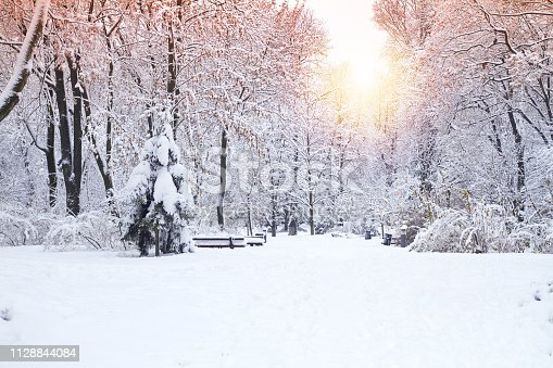 Beautiful winter park, trees covered with snow. Winter landscape