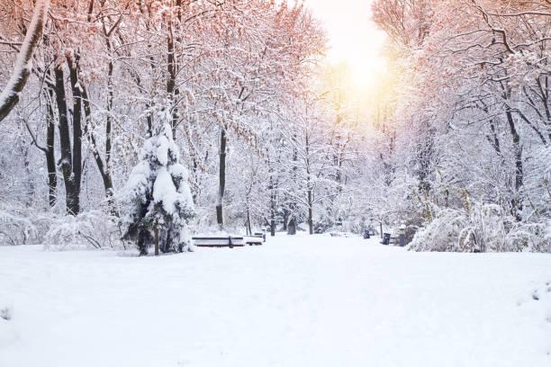 Hermoso parque de invierno, árboles cubiertos de nieve. Paisaje de invierno - foto de stock