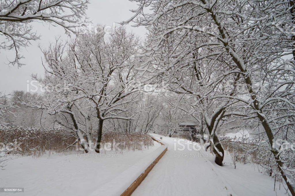 Beautiful winter scene near Yauza river stock photo
