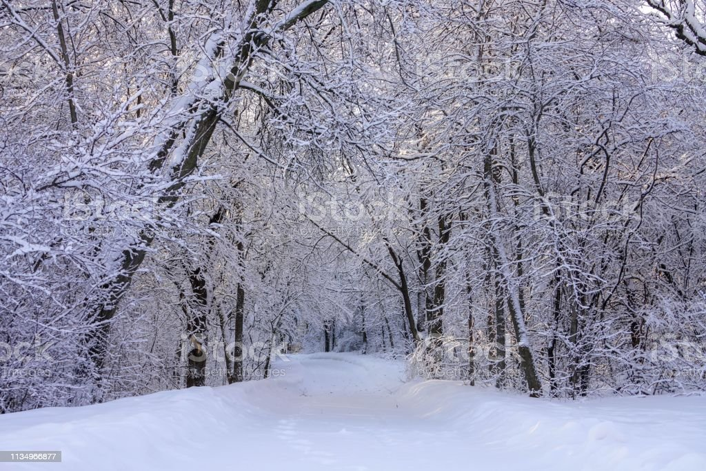 Beautiful Winter Scene with Hoarfrost after Snowfall stock photo