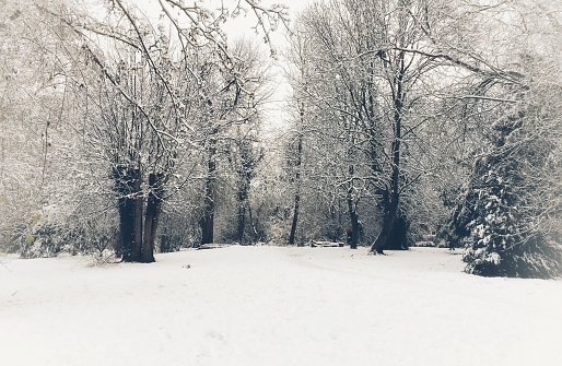 Beautiful winter scenery at Betjeman Millennium Park in Wantage, Oxfordshire, England