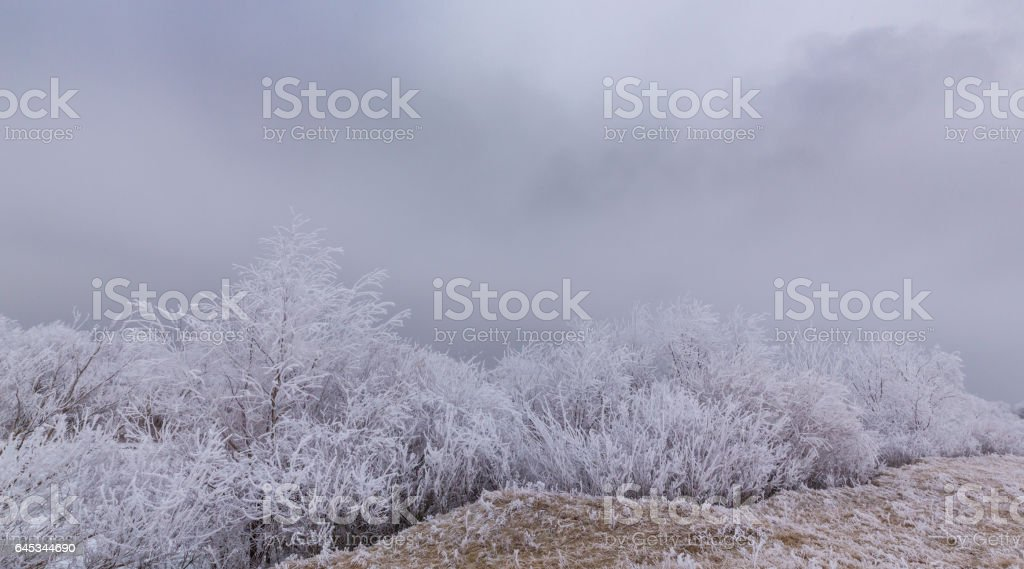 Beautiful Winter Scenery With Trees Covered By Frost Stock Photo
