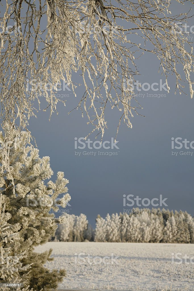 Beautiful Winter Scenics royalty-free stock photo
