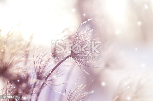 istock Beautiful winter seasonal background with dry plants against sparkling bokeh 637599282