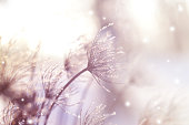 Beautiful winter seasonal background with dry plants against sparkling bokeh lights