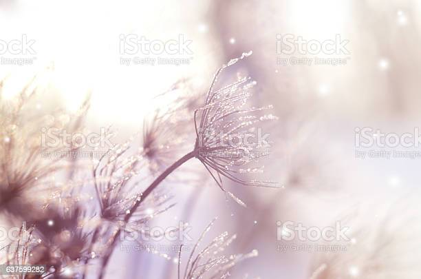 Photo of Beautiful winter seasonal background with dry plants against sparkling bokeh