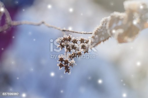 istock Beautiful winter seasonal background with dry plants against sparkling bokeh 637599382