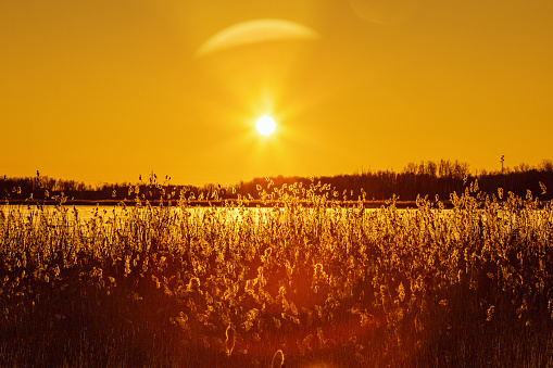 Beautiful winter sun with glares on orange sky. Nature background with snow covered lake, wild pampas grass with white hoar frost glows in rays of evening sun. Wonderful natural scenery in countryside.