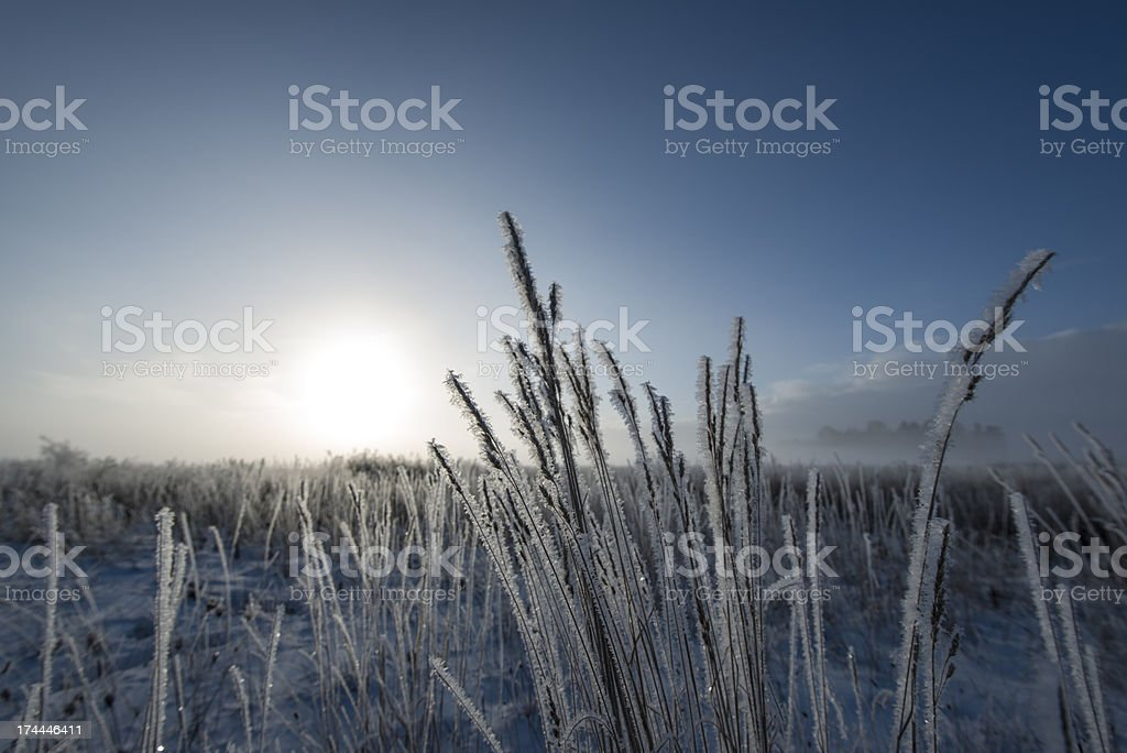 Beautiful winter sunrise over the meadows (XXXLarge) royalty-free stock photo