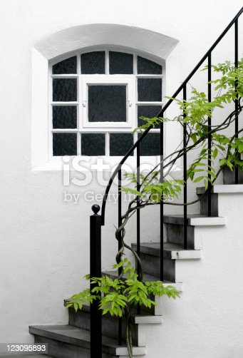 The green leaves of this beautiful wisteria plant contrasts the perfectly clean white of this simple English house.