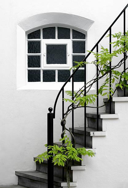 bela glicínia planta cresce em uma elegante escada doméstica - ivy building imagens e fotografias de stock