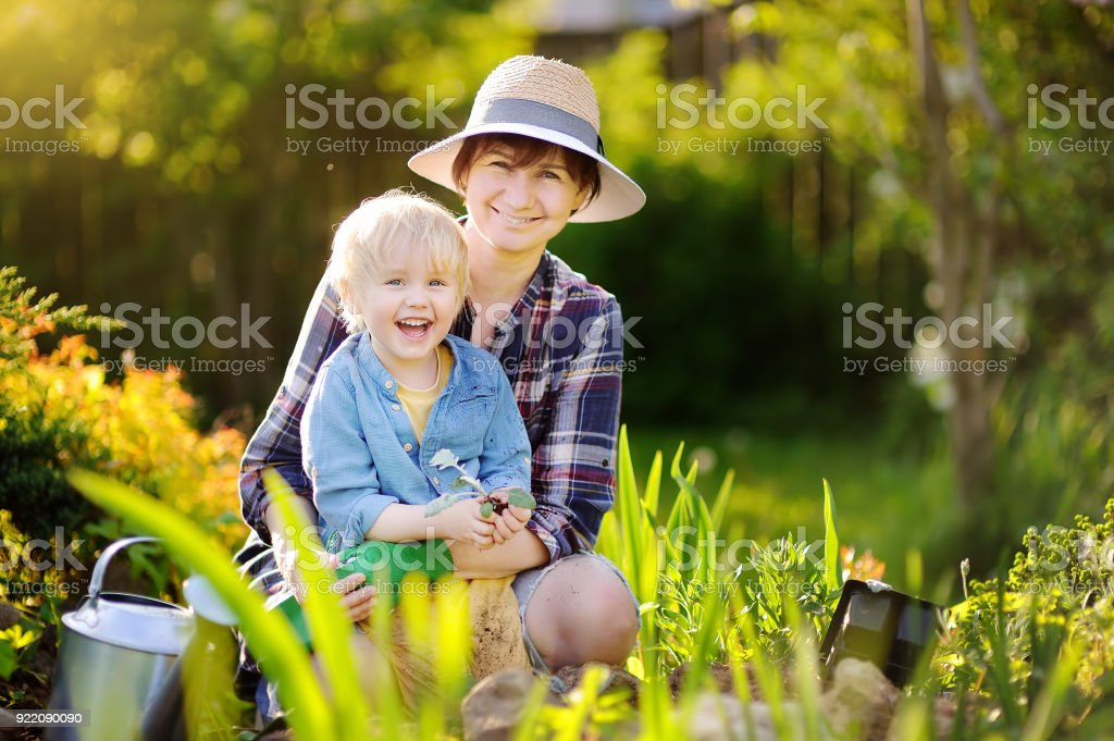 Beautiful woman and her cute son planting seedlings in bed in the domestic garden at summer day stock photo