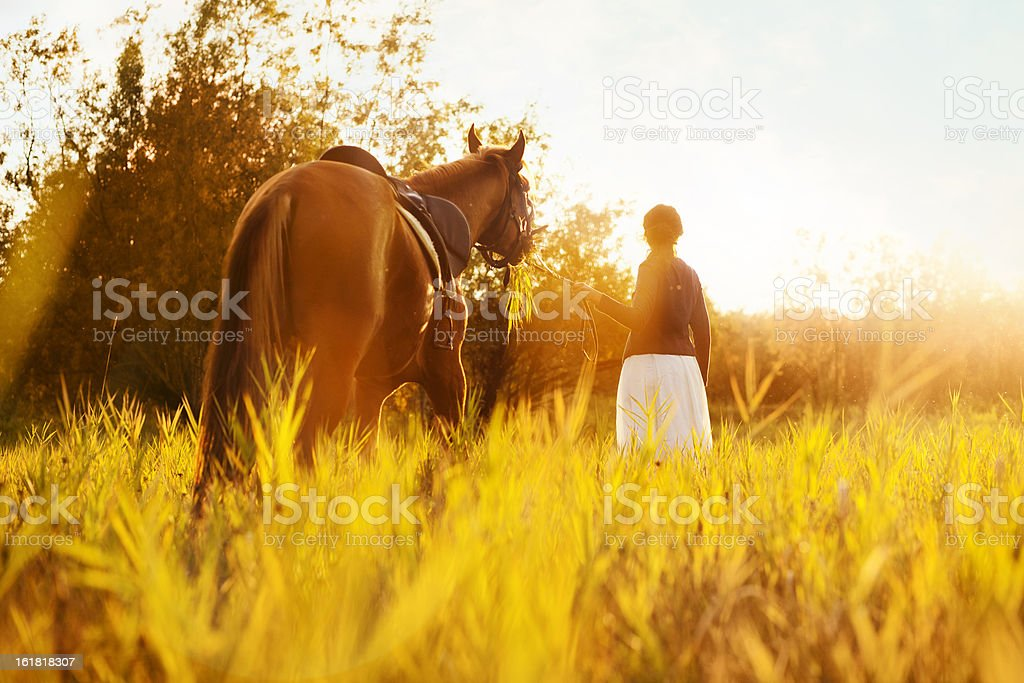 Beautiful woman and  horse royalty-free stock photo