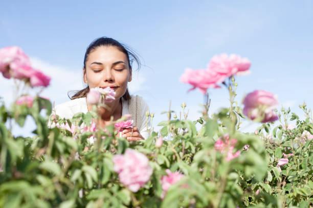 mulher bonita no campo da agricultura da rosa - foto de acervo