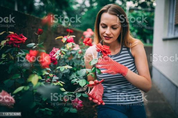 Beautiful woman cutting flowers in the backyard picture id1137323093?b=1&k=6&m=1137323093&s=612x612&h=wzpwvdhe f7jg7fcz1wfcinxz9ej40dekn41iuq3juu=