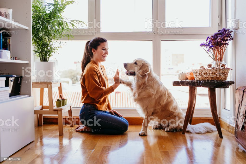 beautiful woman doing high five her adorable golden retriever dog at home. love for animals concept. lifestyle indoors - Royalty-free Abraçar Foto de stock