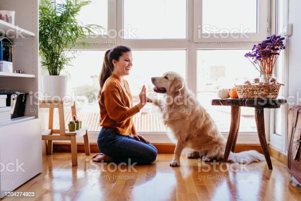 Beautiful Woman Doing High Five Her Adorable Golden Retriever Dog At Home Love For Animals Concept Lifestyle Indoors - Fotografias de stock e mais imagens de Abraçar