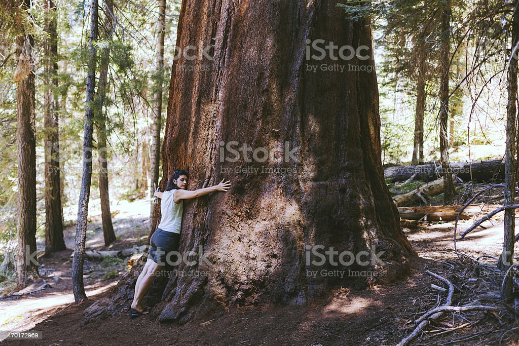 Beautiful Woman Embracing a Sequoia Tree, Love the Nature stock photo