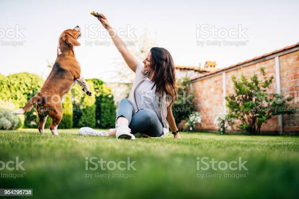 Beautiful woman giving food to dog from her hand picture id954295738?b=1&k=6&m=954295738&s=612x612&h=nb2vxl yrlihbzwl0cl bu 4ztj3gnokytofv33ca9m=
