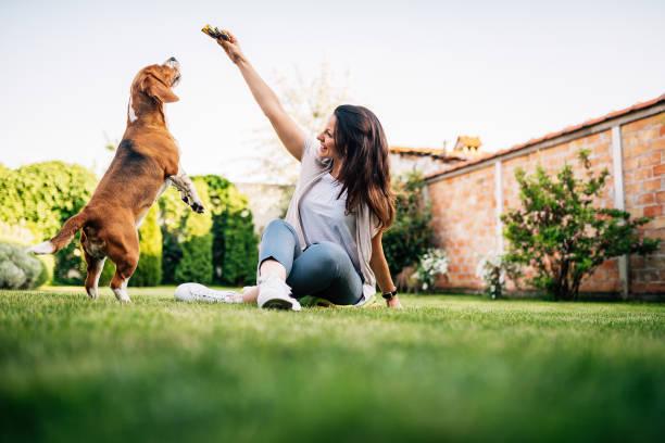 hermosa mujer dando alimento al perro de su mano. - alimentar a tu perro fotografías e imágenes de stock
