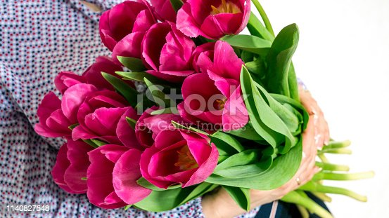 Beautiful woman holding a bouquet of tulips. Tulips in the hands of a woman close-up. Vivid purple tulips in hands.