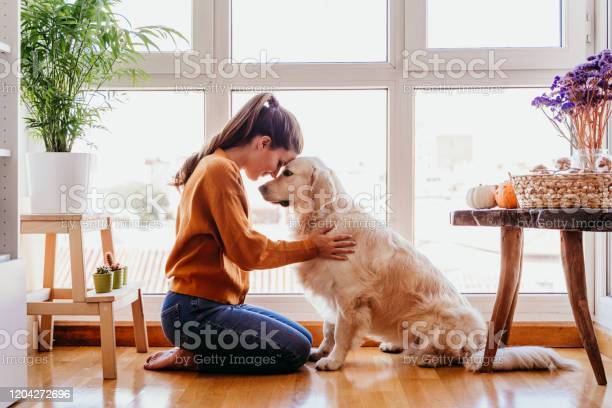Beautiful woman hugging her adorable golden retriever dog at home picture id1204272696?b=1&k=6&m=1204272696&s=612x612&h=azxqfmvflrt1nie mggzrndcd7hbbu0oxnhs4yc8kya=