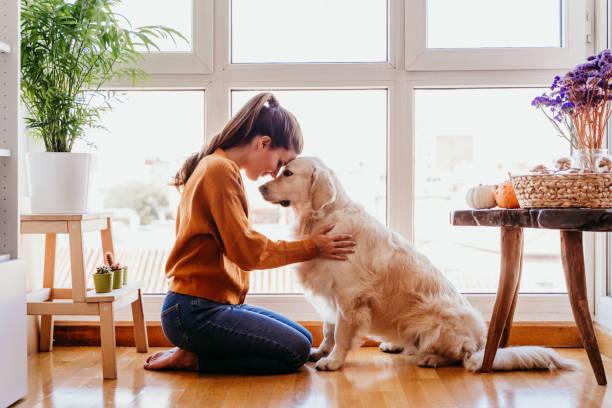 hermosa mujer abrazando a su adorable perro golden retriever en casa. amor por el concepto de animales. estilo de vida en interiores - foto de stock