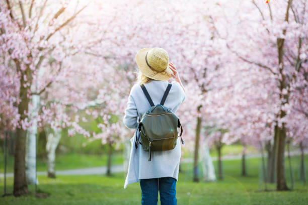 Beautiful woman in straw hat traveling in beautiful park with cherry trees in bloom stock photo