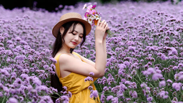 Beautiful woman in yellow dress and straw hat holding colorful flowers posing in purple Verbena Bonariensis flower field, charming Chinese girl with black long hair enjoy her leisure time outdoor. stock photo