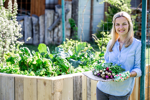 beautiful Woman is holding fresh bio radishes in her hands