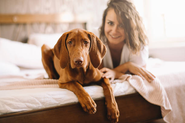 beautiful woman lying on bed with her dog - pet shop and dogs not cats stock pictures, royalty-free photos & images