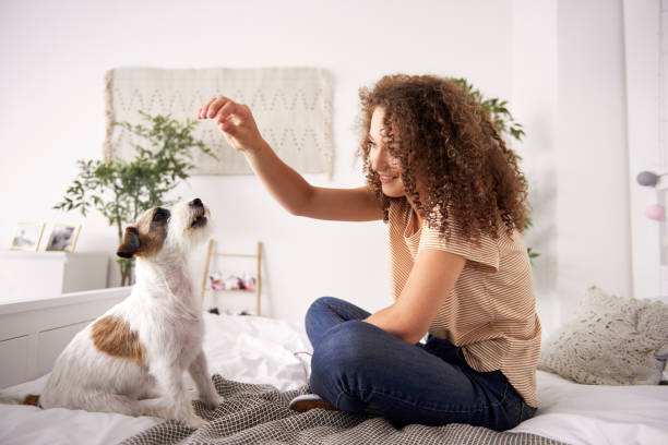 Beautiful woman playing with dog on the bed stock photo