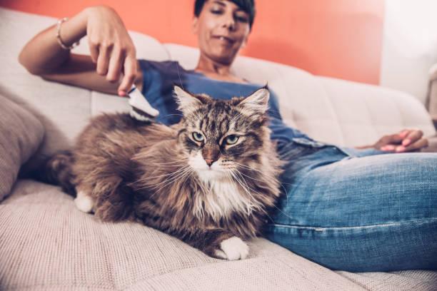 schöne frau auf dem sofa entspannen und ihre pelzigen katze kämmen - sanft und sorgfältig stock-fotos und bilder