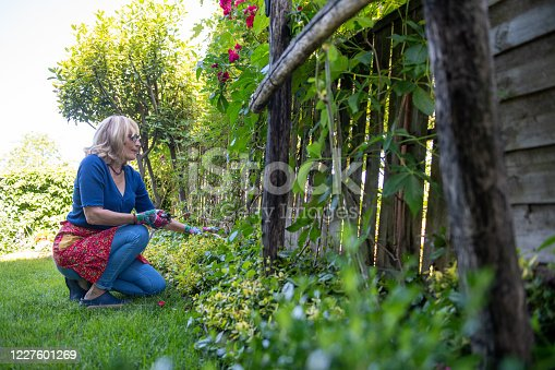 istock Beautiful woman taking care of her roses in the garden 1227601269