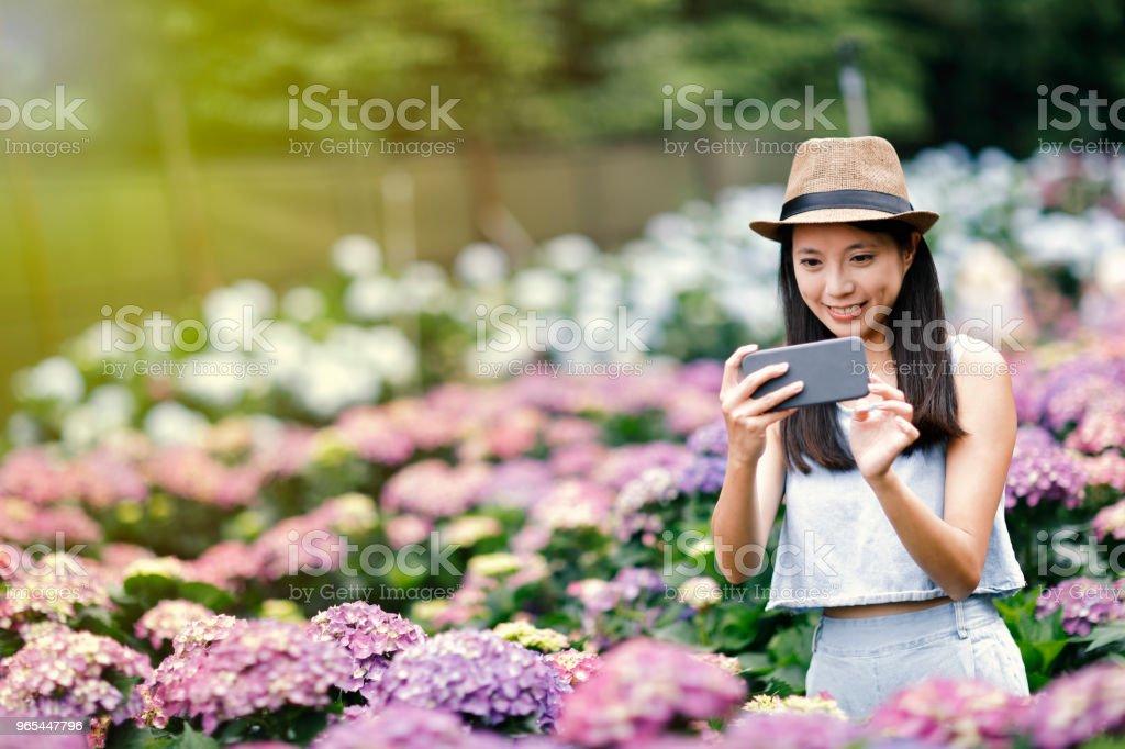 mulher linda tomando selfie no jardim - Foto de stock de Adulto royalty-free