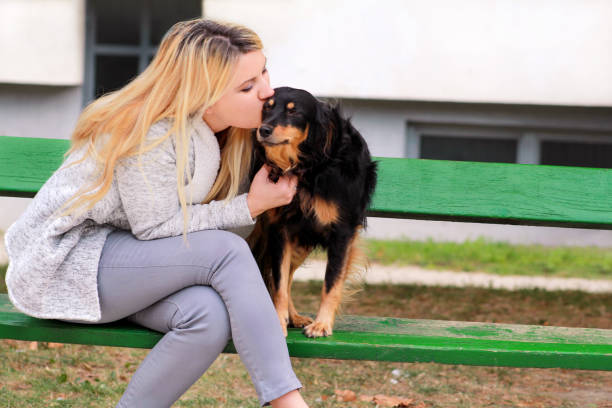 Beautiful woman with his small mixed breed dog sitting and posing in front of camera on wooden bench at city park. Portrait of owner and cute half breed dog enjoys, kissing, petting together outdoors. stock photo