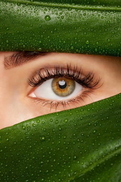 Beautiful Woman with long lashes on the background of a leaf of monstera with water droplets.. Eyelash extension procedure. stock photo