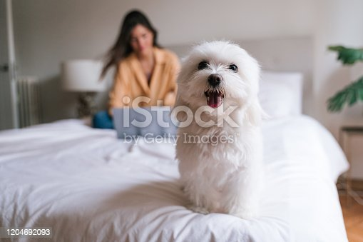 beautiful woman working on laptop at home on bed. Cute small maltese dog besides. Lifestyle