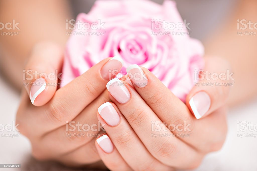 Beautiful woman's nails with french manicure  and rose stock photo