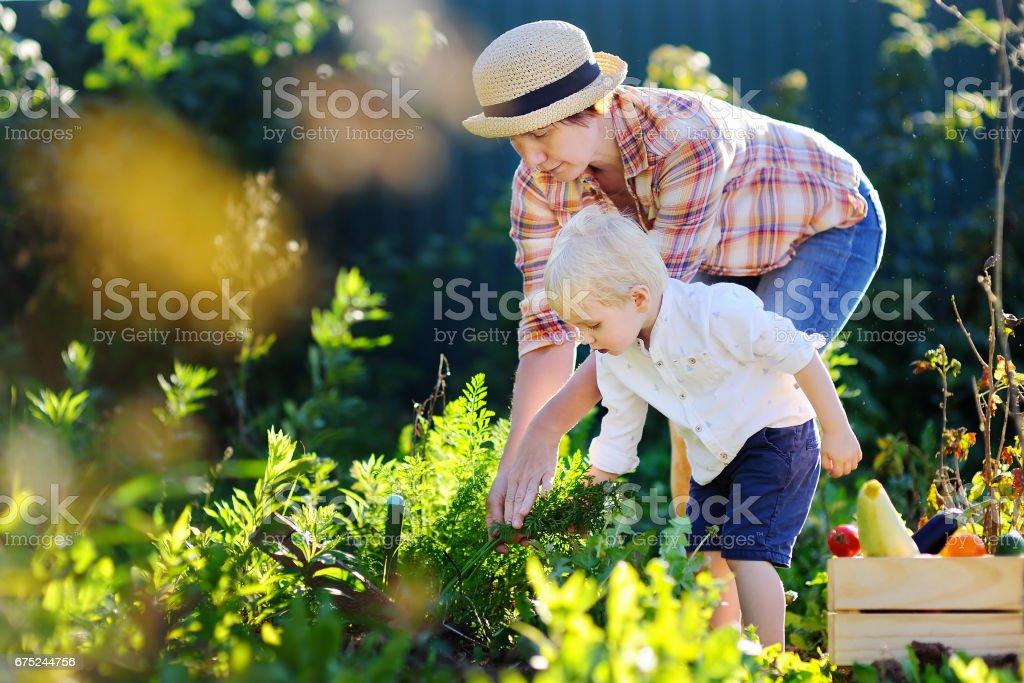 Beautiful women and her little grandson enjoying harvest - foto de stock