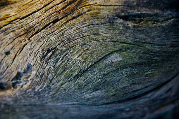 A beautiful wooden surface unique background photo stock photo