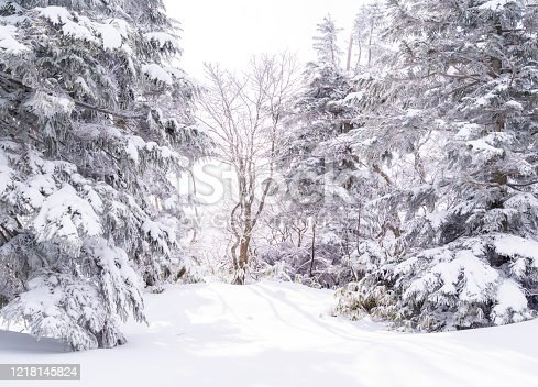istock Beautiful woodland and tree cover with snow in Zao moutain Sendai Japan 1218145824