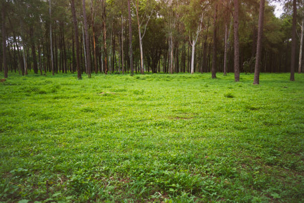 Beautiful woods forest with green nature stock photo