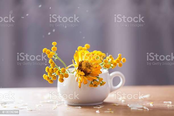 Beautiful yellow aster flowers and falling petals picture id613226266?b=1&k=6&m=613226266&s=612x612&h=jehmrym1ul3jnhkuto09 uktoinb8oewpto9 alpuka=