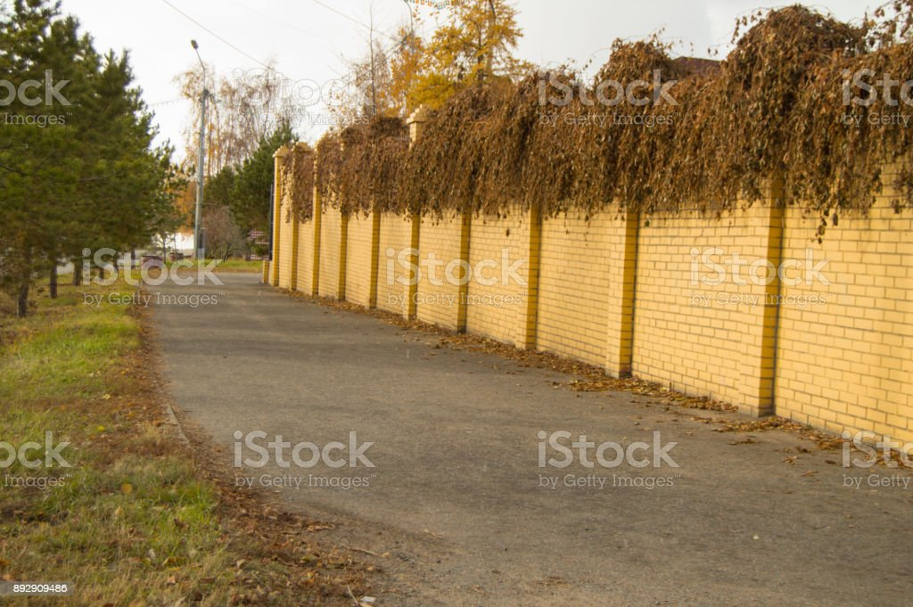 Beautiful yellow brick fence and curly dried plants on it in the fall stock photo