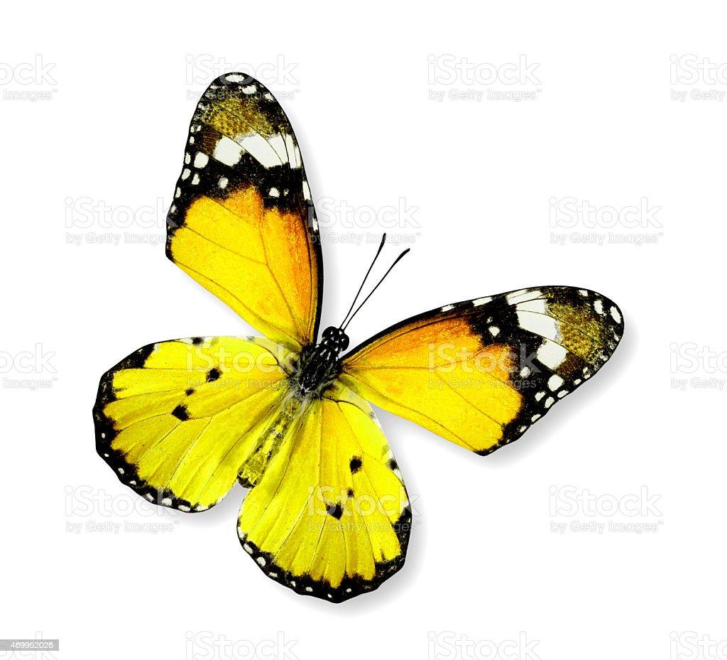 красивые жёлтые картинки