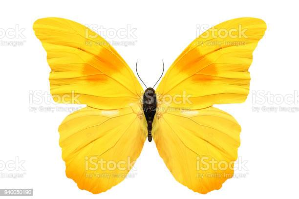 Beautiful yellow butterfly isolated on white background picture id940050190?b=1&k=6&m=940050190&s=612x612&h=emcpozmtsmxrg8dhbwy49ozrlx7d56px9gslv5dkjbq=