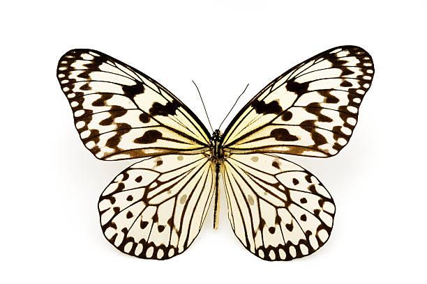 Beautiful yellow butterfly picture id625790876?b=1&k=6&m=625790876&s=612x612&w=0&h=qyk2wrsljz3l3yijb5j 7167sq9myp7ieuvyqlmdmke=
