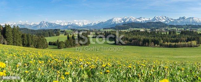 istock Beautiful yellow flower meadow in a idyllic mountainous landscape. 949078816