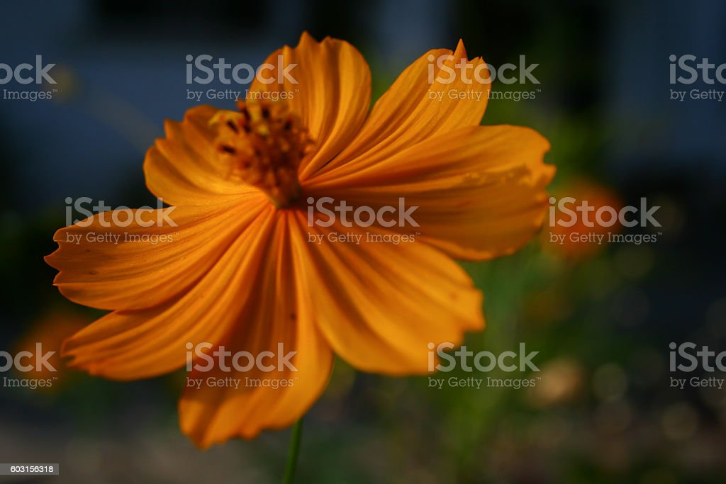 beautiful yellow flower stock photo